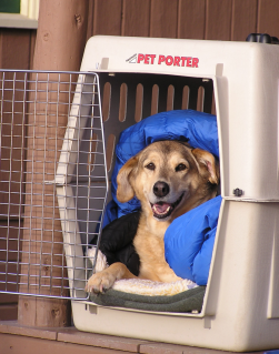 Best crates for dogs plastic