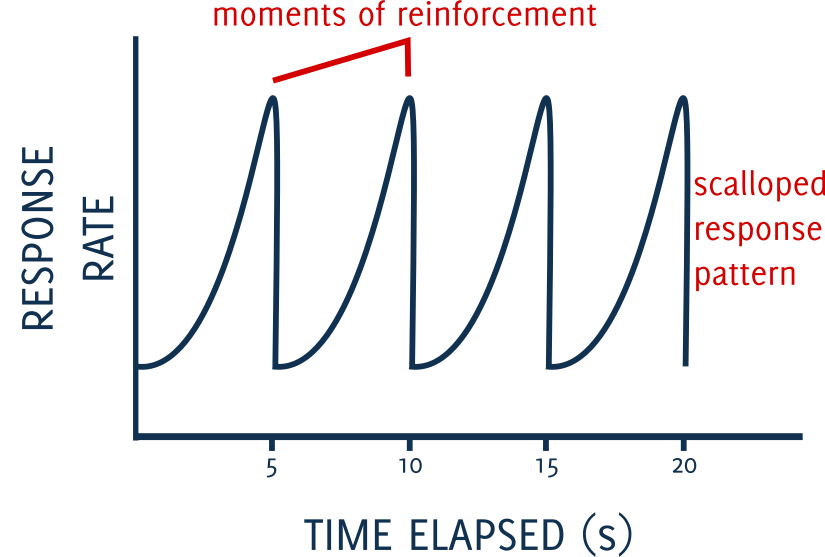 fixed interval schedules of reinforcement dog training
