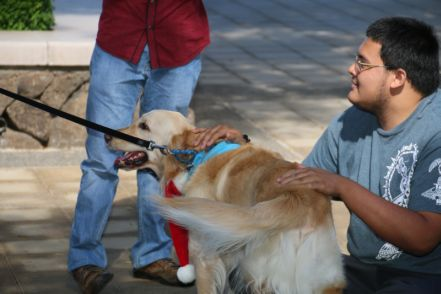 HOW TO CERTIFY A THERAPY DOG 1