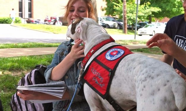 Making A Difference – How To Certify A Therapy Dog
