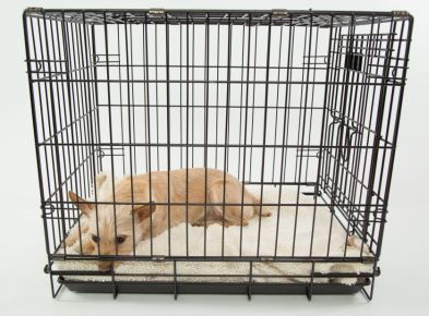 best wire crate for dog