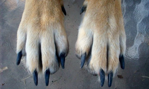 How To Cut Dogs' Nails Without Pain Or Fear