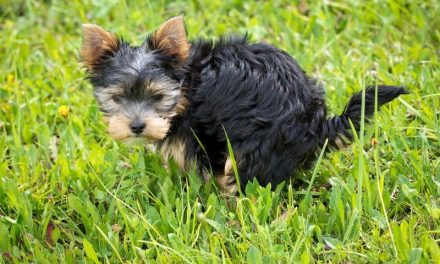 How To House Train Your Dog Perfectly (Young Or Old!)