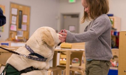 How To Make Your Dog A Therapy Dog, Step-By-Step