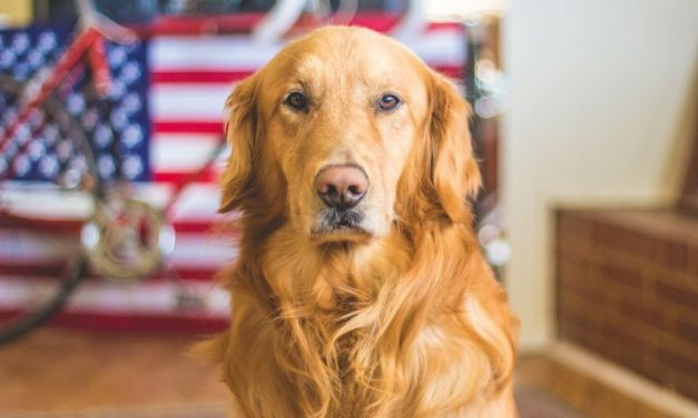 Hero In The Making – How To Train A Service Dog