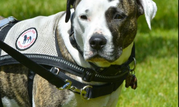 How To Make Your Dog A Service Dog, Step-By-Step