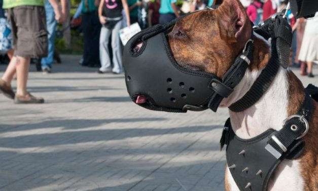 Why You Should Have A Muzzle For Your Dog (Even If It Doesn't Bite)