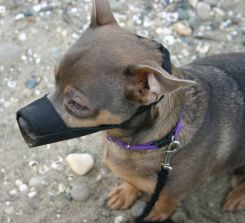 muzzle for dogs