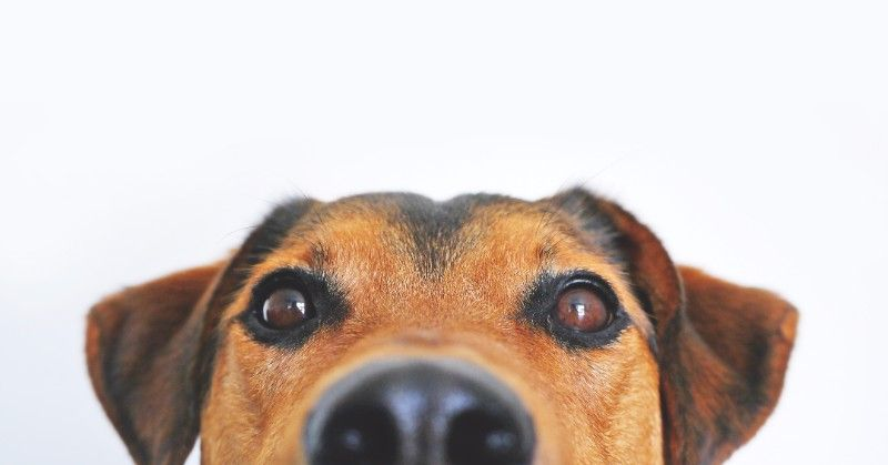 The Nose Knows: Nose Work For Dogs