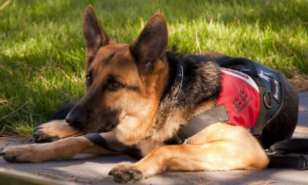 Service Dogs – What is a Service dog?