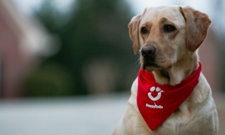 Love On Four Legs – What Is A Therapy Dog?