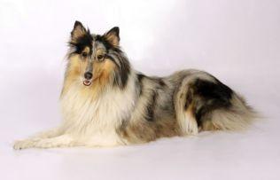 what kind of dog should I get 3