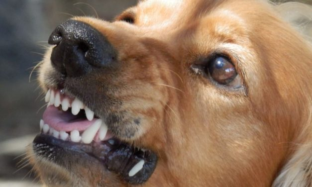 Sudden Aggression in Family Pets: Why Dogs Attack
